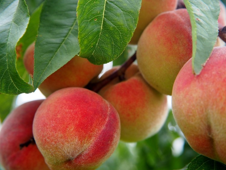Pick a peach and take a bite!