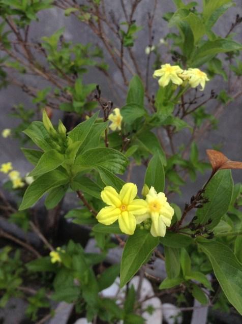 Yellow little flower