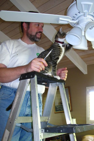 Feline Inspection