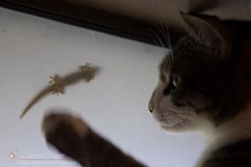 Gecko Frustration