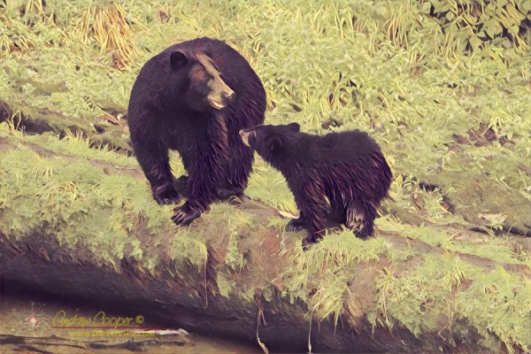 A mother black bear and cub at Anan Bear Observatory, Alaska