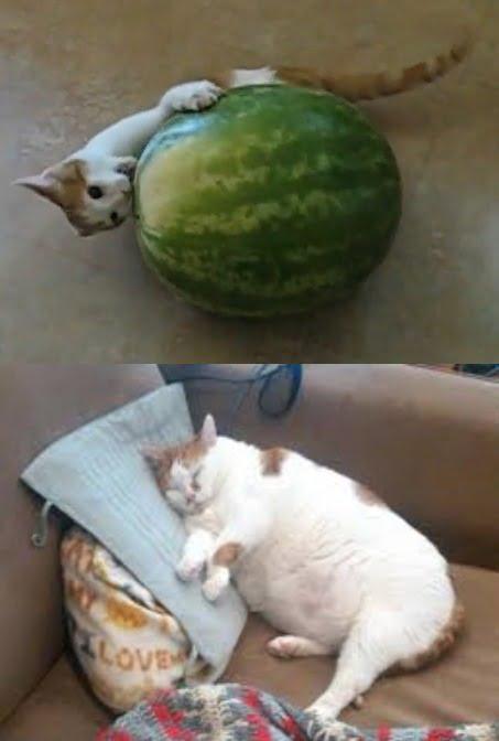 cat ate watermelon