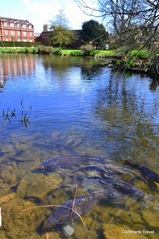 Emmanuel pond