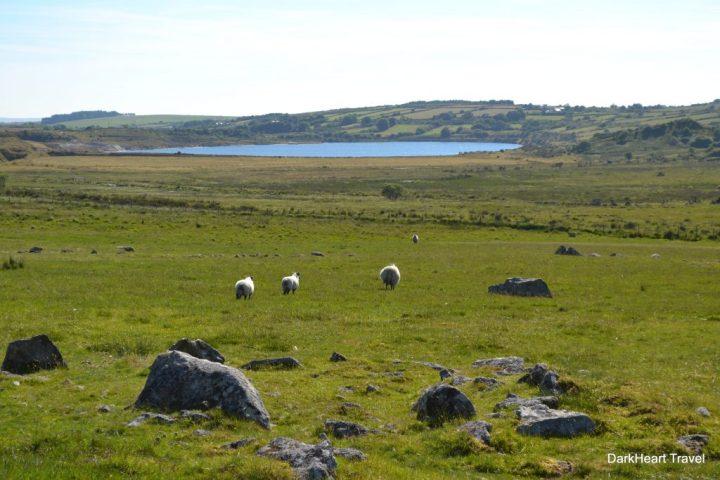 Bodmin Moor landscape