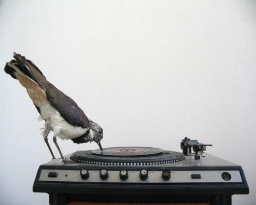 bird-on-45