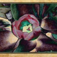 Victoria Day Flower-gram