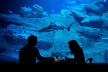 Underwater Shark Tank Bedroom