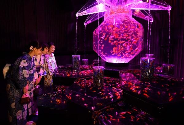 Art Aquarium Exhibition Tokyo Japan
