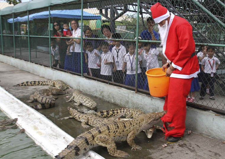 A worker wearing a Santa Claus attire has his pants bitten by a crocodile during feeding time inside a cage of a crocodile farm in Manila December 16, 2011. The Philippines, a mainly Roman Catholic country in Southeast Asia, celebrates one of the longest Christmas holiday in the world, playing Christmas carols in shopping malls in September and putting up lantern and fireworks early in December. (Romeo Ranoco/Reuters)