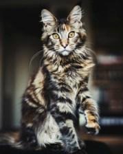 Never name a cat Loki