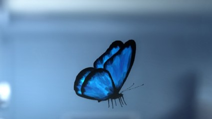 butterfly-life is strange