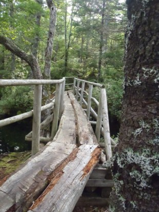 Mystery Hike (4) - Copy