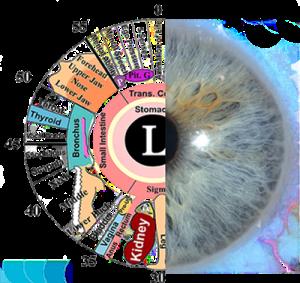 Iridology eye chart