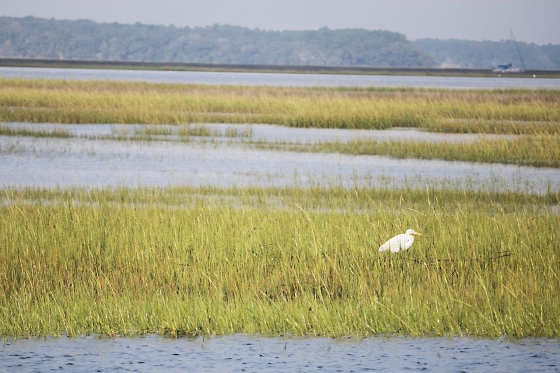 swampland