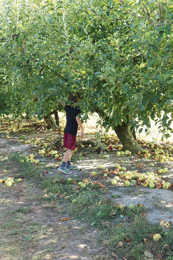 fall-to-do-apple-tree