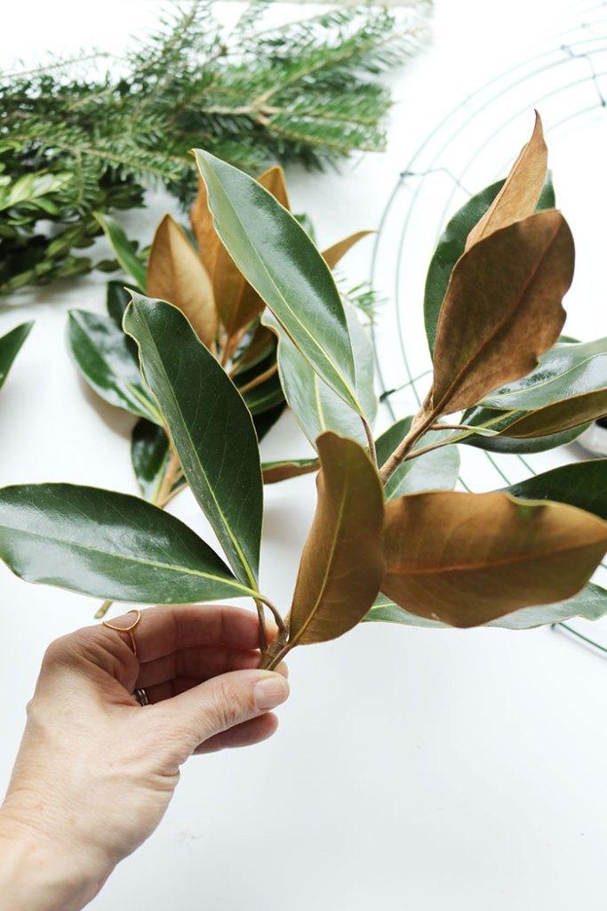 magnolia-branch