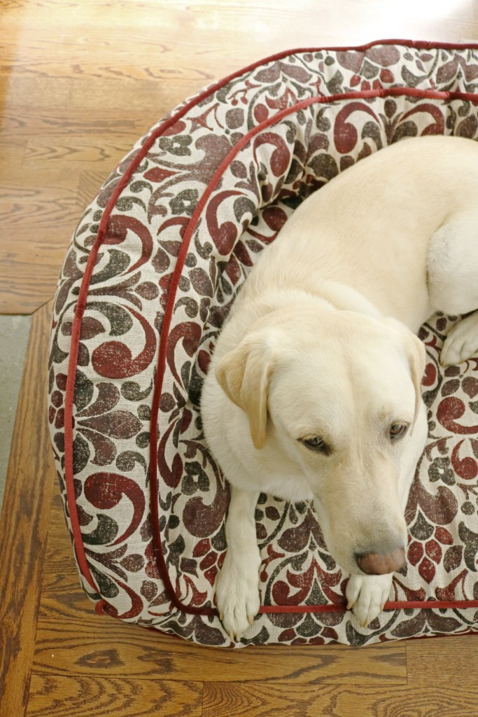 Our dog Scout loves his Harper pet sofa bed from La-Z-Boy, which just launched a new pet furniture that fits every pet sleep style and just about any room in your home.  These stylish pet beds from La-Z-Boy are a must have!  #ad #sponsored #lzbpets || Darling Darleen
