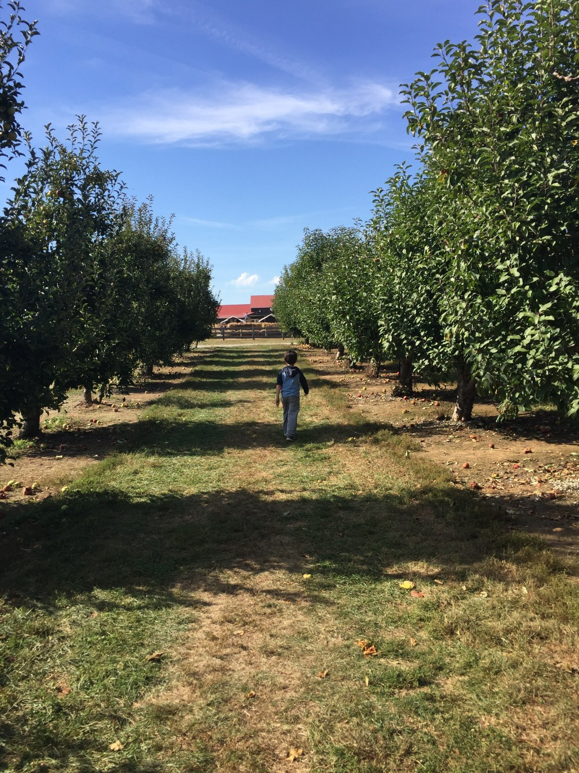 Graham walking in Evan's Orchard