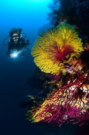 raja ampat scuba diving