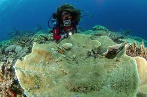 Scuba diving and travelling to Raja Ampat