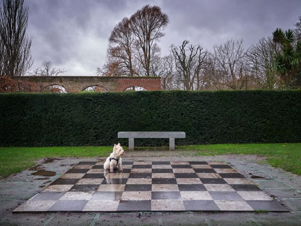 web-Chess-dog-main copy