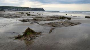 Submerged forest, Borth beach