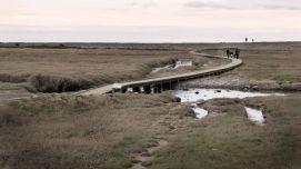 Sparkhayes Salt Marsh