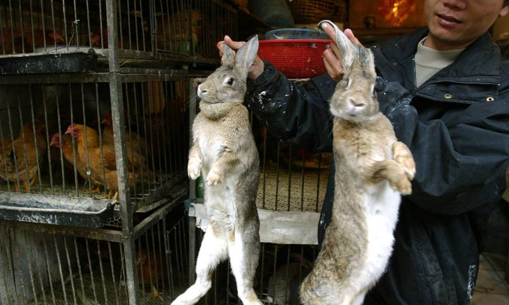 Wuhan has banned eating wild animals and nearby provinces are offered farmers cash to stop breeding exotic livestock