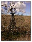 Forgotten Windmill - Carlsbad