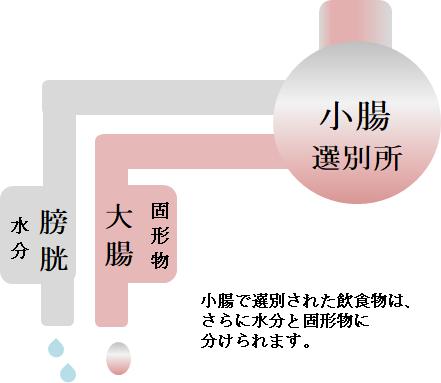 小腸の役割の図