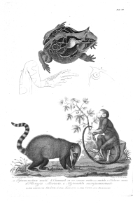 Illustrations in the Beagle Library
