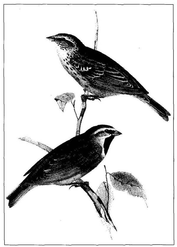 Armstrong, Patrick. 1992. Darwin's desolate islands: A