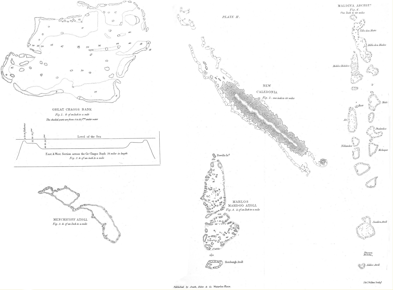Darwin, C. R. 1842. The structure and distribution of
