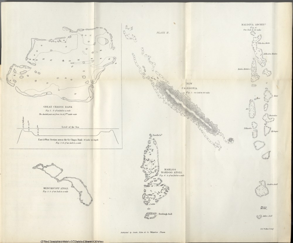 medium resolution of darwin c r 1874 the structure and distribution of coral reefs 2d edition london smith elder and co