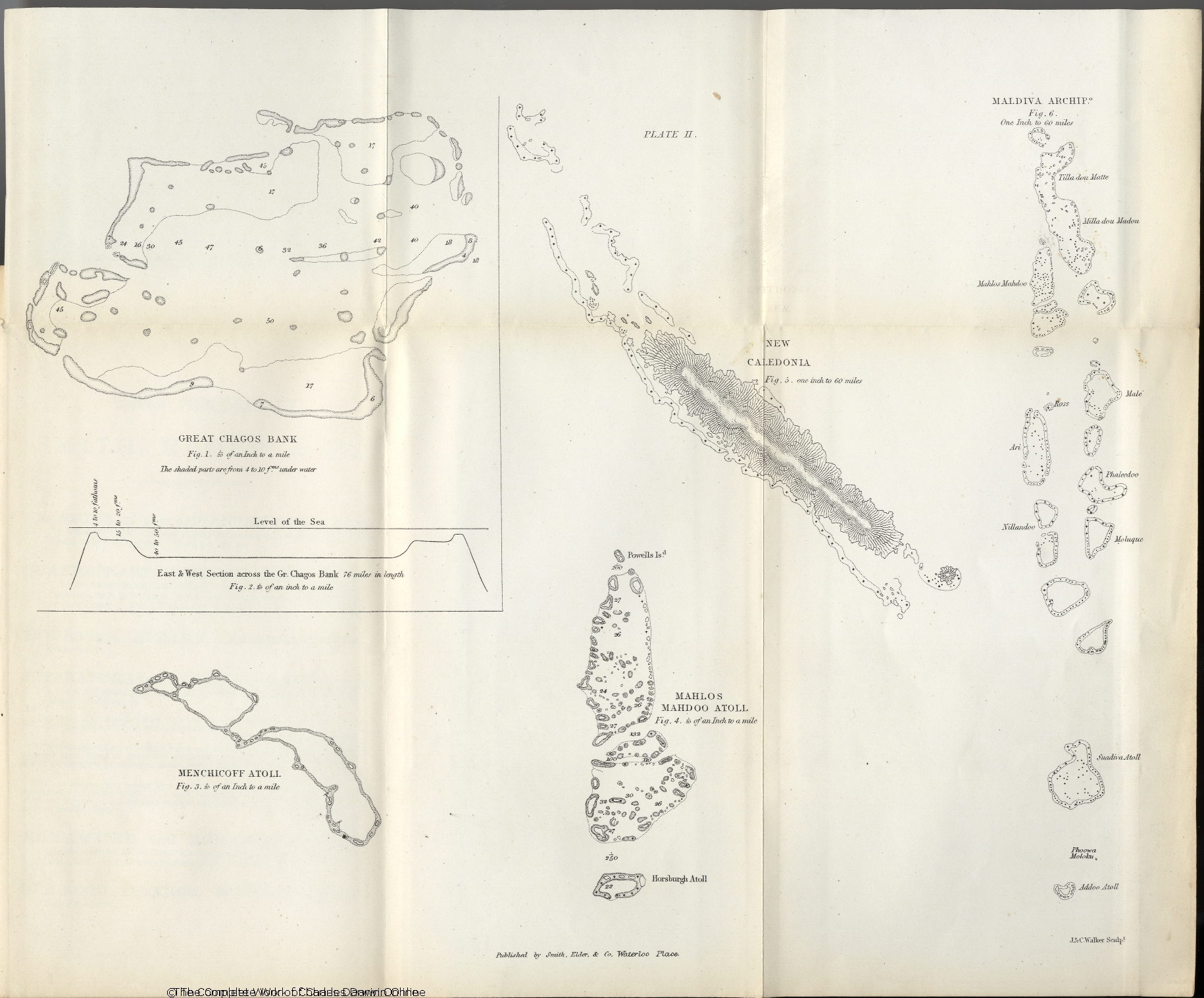 hight resolution of darwin c r 1874 the structure and distribution of coral reefs 2d edition london smith elder and co