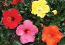 Allora Gardens