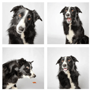 Photographer Guinnevere Shuster creates photo booth style pictures for the shelter dogs of The Humane Society of Utah.