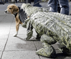 Looks like an alligator is going Trick or Treating. Wrong, oh so wrong.