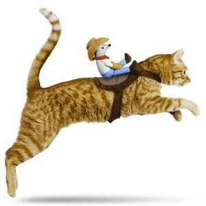 Ride'em Cowboy! Cat Halloween Costume.