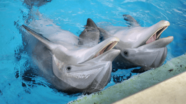 The National Aquarium in Baltimore now has plans to move its Atlantic bottleneck dolphins to an oceanside sanctuary by 2020.