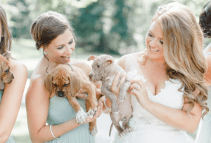 Bride Sarah Mallouck poses with a pit bull mix puppy and one of her bridesmaids holds another rescue puppy instead of flower bouquets.