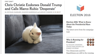 A new Google Chrome extension will now turn every photo of Donald Trump into pictures of kittens instead.