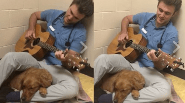Veterinarian Dr. Ross Henderson sings to Ruby the dog to soothe her before surgery.