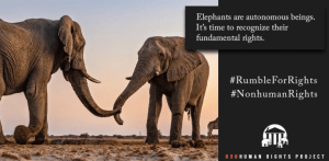 This is an example of the posts The Nonhuman Rights Campaign would like supporters to post online to help the elephants.