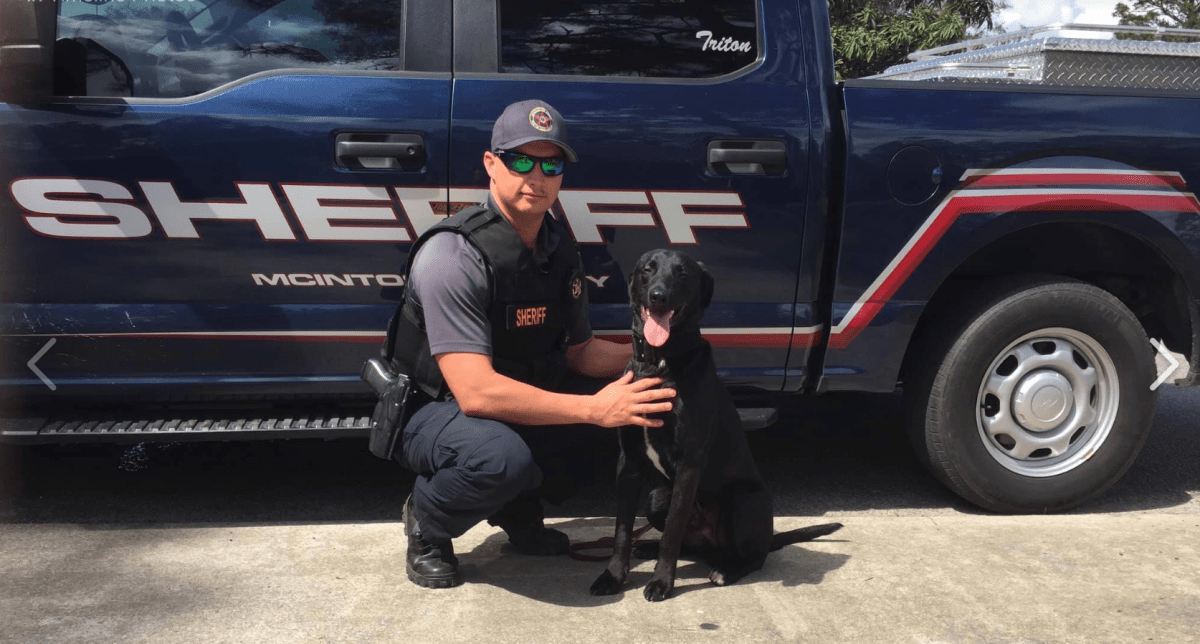 Homeless Dog Becomes Certified Narcotics K9 With Mind-Blowing Talents