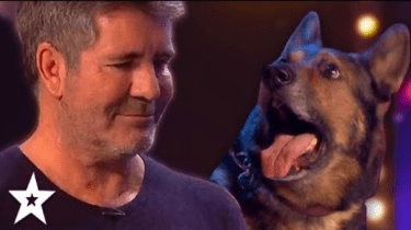 Dog is a magician who makes Simon Cowell cry while performing on Britain's Got Talent.