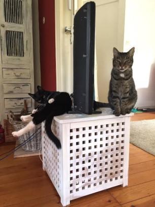 Fred und Henry