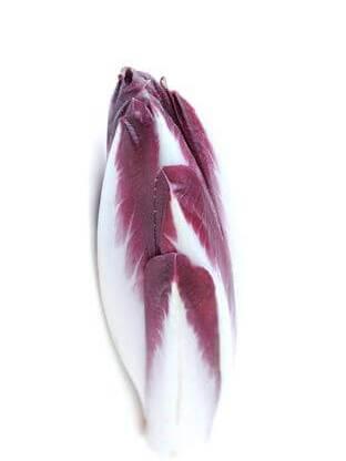 Roter Chicoree