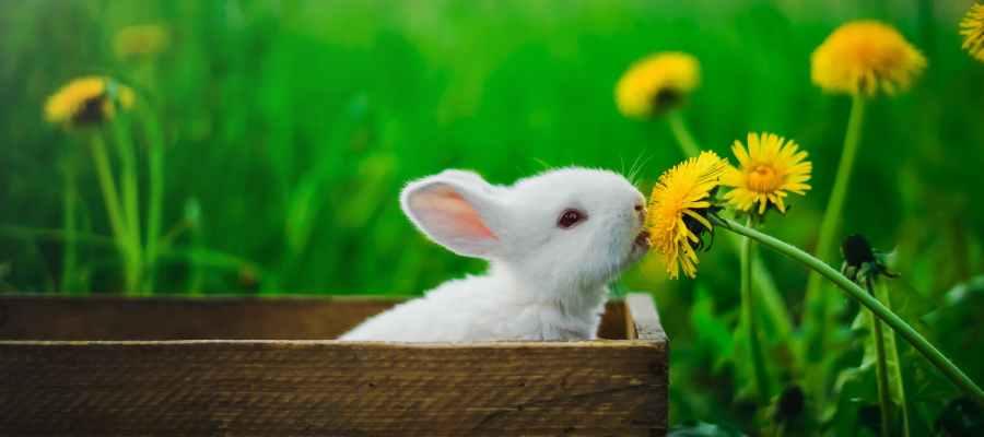 kahverengi ahşap kutu içinde beyaz tavşan