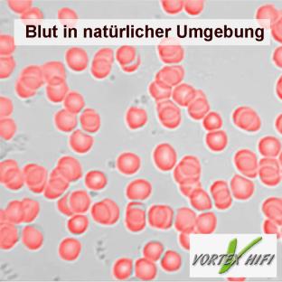 Blut in einer gesunden, elektrosmogarmen Umwelt. Vereinzelte rote Blutkörper.